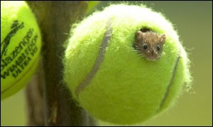 Wimbledon-tennis-balls-homes-for-mice